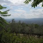 Uitzicht over de olijvengaard